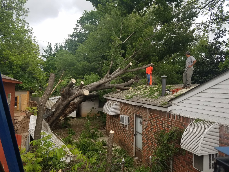 tree service in edmond