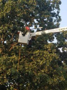 tree crane company