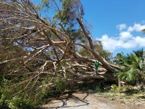 Tip Top Tree Tree Cutting Damaged Tree