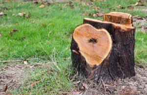 Tip Top Tree Tree Stump Removal