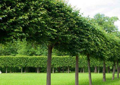 Tip Top Tree Tree Maintenance
