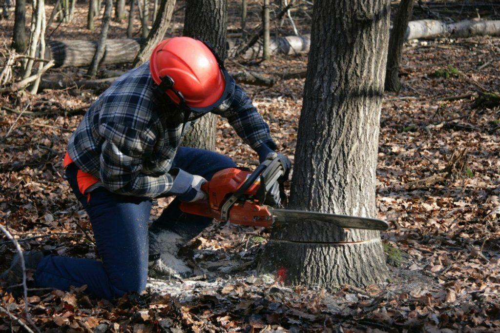 Man Cutting Tree Tip Top Tree