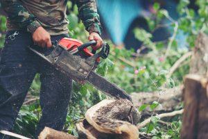 Tree Cutting Tip Top Tree