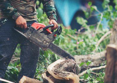 Tip Top Tree Tree Cutting