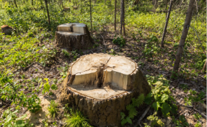 Stump Removal Tip Top Tree