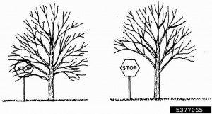 Tip Top Tree Crown Raising