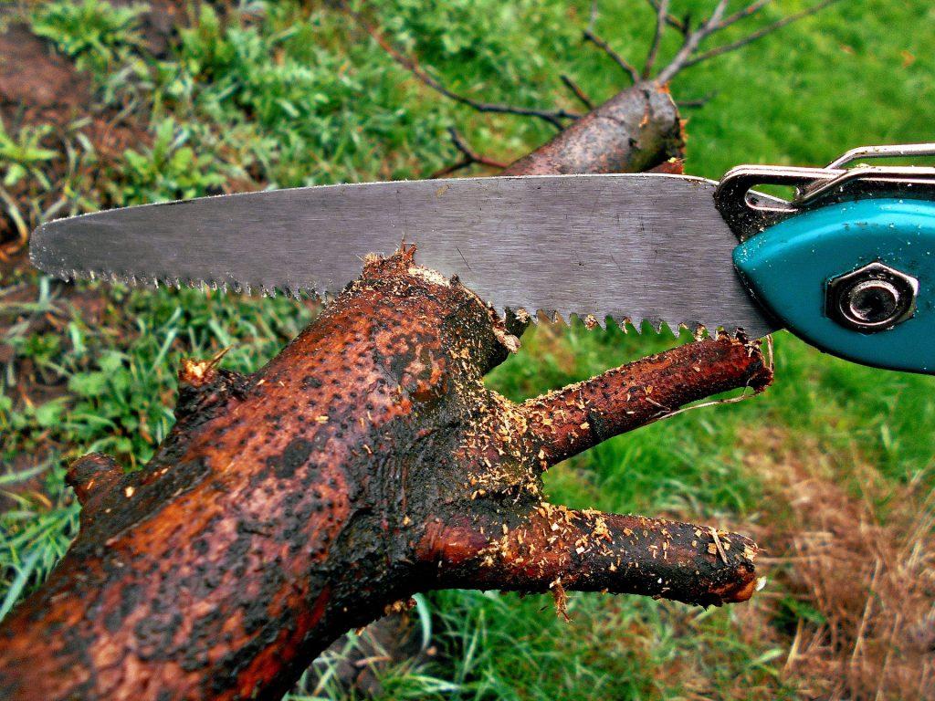 Tip Top Tree Tree Trimming